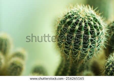 Nature green background or wallpaper: domestic cactus closeup. - stock photo