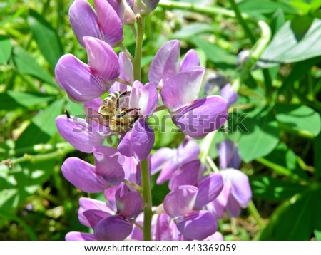 Nature. Green. Beauty. Natural. Park. Forest. Leaf. Bush. Tree. Flora. Branch. Background. Green background. Background nature.Violet. Purple. Purple flowers. Macro. Flowers. Summer.  - stock photo