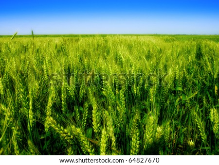 Nature - green field - stock photo