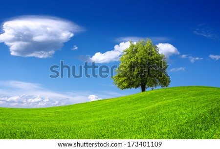 Nature green landscape - stock photo