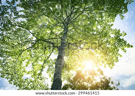 Nature green wood sunlight backgrounds - stock photo