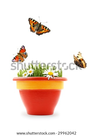 Nature in a flower pot - stock photo