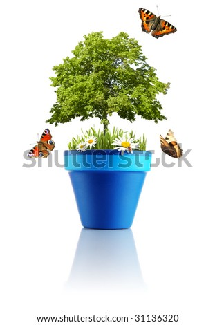 Nature in a pot - stock photo