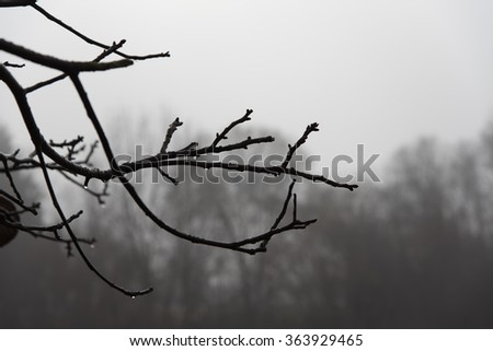 Nature in the fog in winter