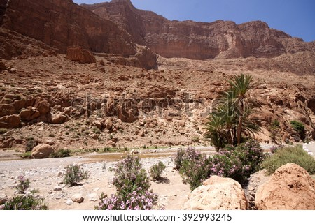 Nature in Todra Gorge, Morocco