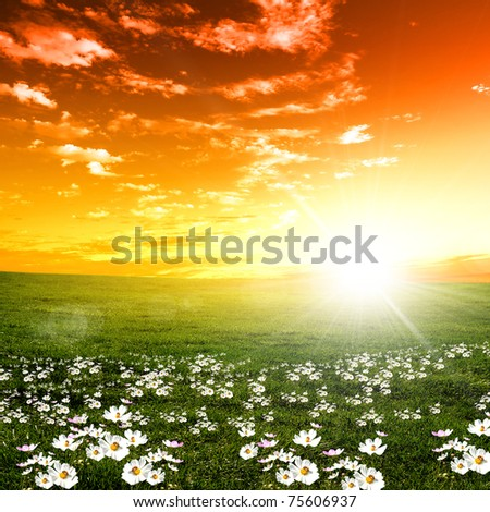 nature landscape and sunset on the background