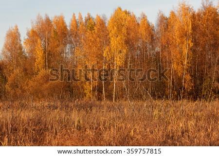 Nature landscape in autumn colors - stock photo