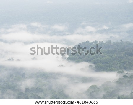 Nature landscape of mountain Mist with green plant in the morning at Pang Sida, Sa Kaeo, Thailand with soft focus