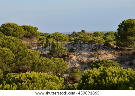 nature landscapes in the park and dunes