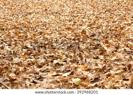 Nature leaves - stock photo