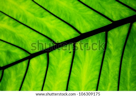 Nature line and texture green leave. - stock photo