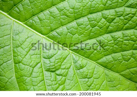 Nature macro abstract background with bright green leaf - stock photo