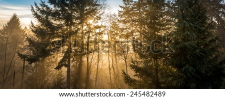Nature of dreams, sun rays through the fog in an idyllic natural forest landscape. Exploring the mystical wilderness of British Columbia. - stock photo