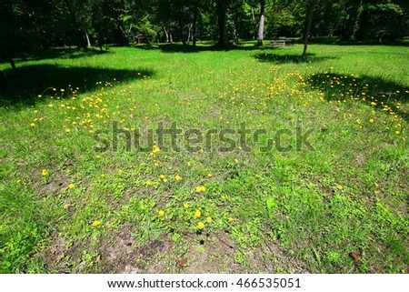 Nature of green trees with  in park . Beautiful park with green trees   Natural walkway in quiet green park.