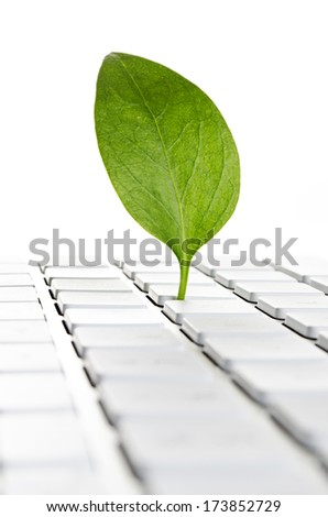 Nature online. Leaf on a computer keyboard  - stock photo