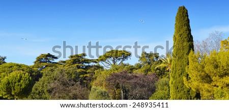 Nature park vegetation - stock photo