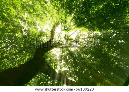 nature. pathway in the forest with sunlight - stock photo