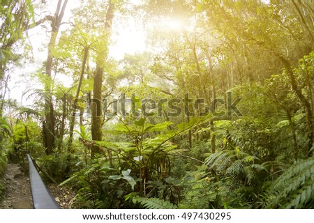 Nature rain forest with morning sunlight