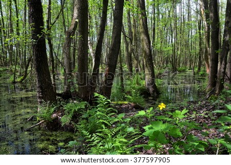 Nature reserve-wetland