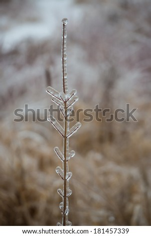 Nature's Ice Sculpture after ice storm - stock photo