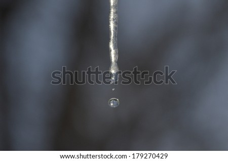 Nature's Jewel (Sparkling icicles with water drops) Some of them look like they were sprayed with silver paint.  Some of them produced a sparkling drop of water. - stock photo