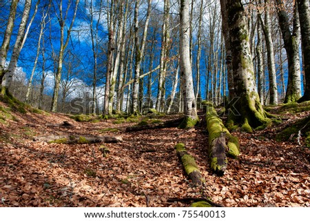 Nature scene from a forrest in Norway at autumn - stock photo