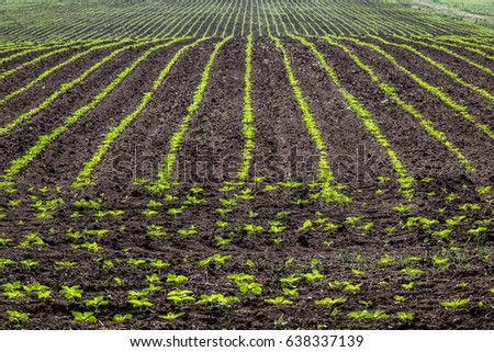 Nature scenery of farmland agricultural field