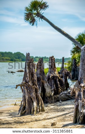 nature scenes around hunting island south carolina - stock photo