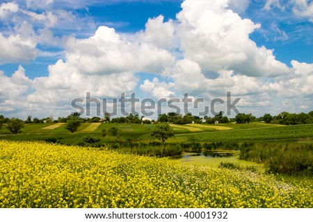 nature series: summer landscape with flowers and pond