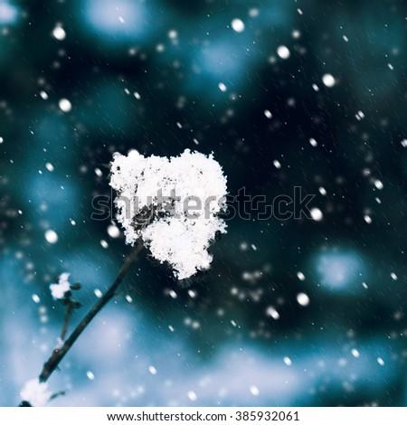 nature snow - stock photo