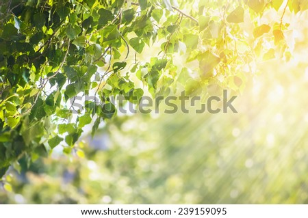 Nature spring summer background with green leaves branch and sunlight - stock photo