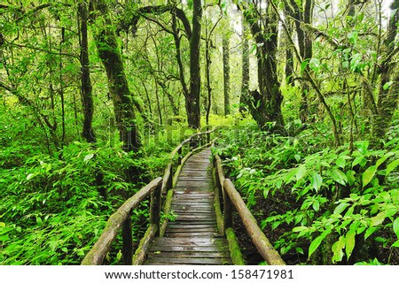 Nature study trail in the forest. - stock photo