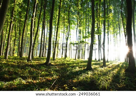 nature. sunset in the forest - stock photo