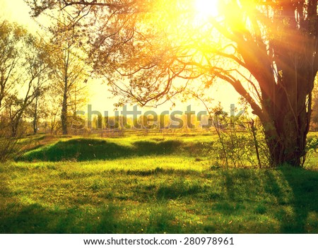 Nature sunset scene. Summer Park. Beautiful field with trees. with Sun Rays. Summertime - stock photo