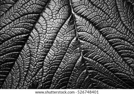 Nature texture. Leaf of a plant. Black and white.