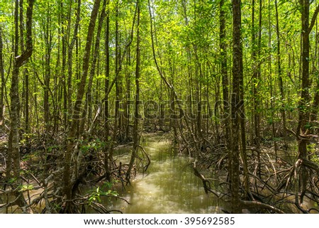Nature Trail at Ranong biosphere reserve, Mangrove forest, Thail