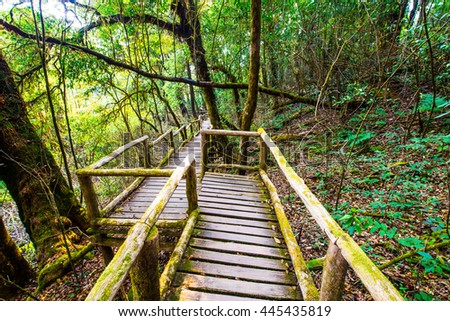 Nature Trail in Doi Inthanon National Park, Thailand - stock photo