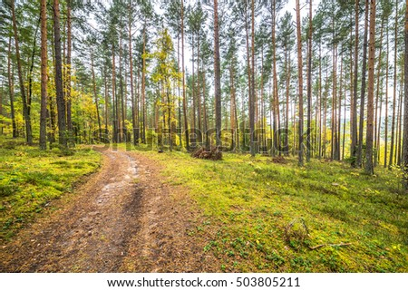 Nature trail through pine forest in autumn, landscape, Poland