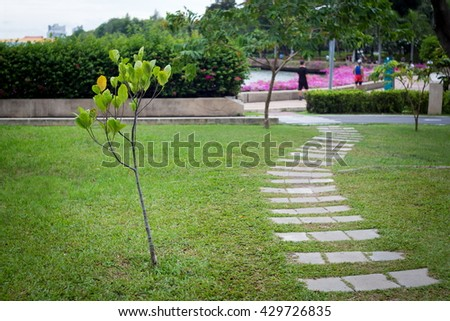Nature tree and sidewalk in the public garden at rainy season.