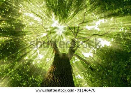 nature. tree in the forest with sunlight - stock photo