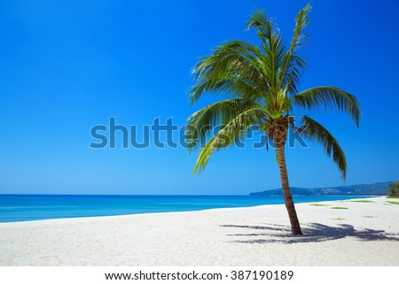 Nature View of tropical beach with one lonely palm. - stock photo