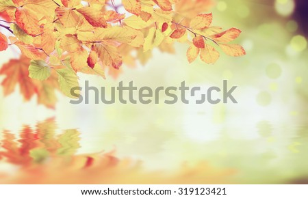 Nature vintage autumn background with foliage for rustic design - stock photo