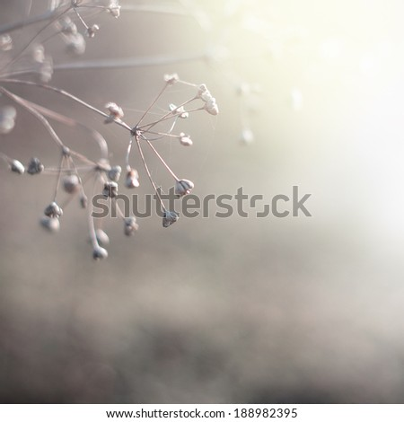 nature vintage background - stock photo