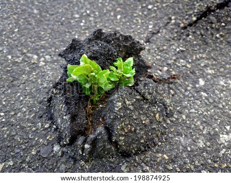 Nature Wins. Tree vs asphalt / outdoors photography of small sprout making the way through firm asphalt  - stock photo