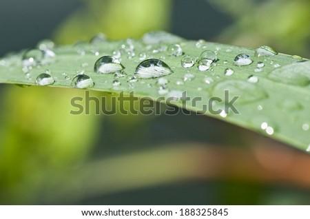 nature zen background  - stock photo