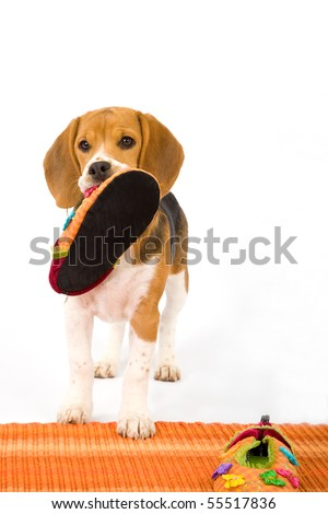 Naughty Puppy Cute Stock Images Royalty Free Images