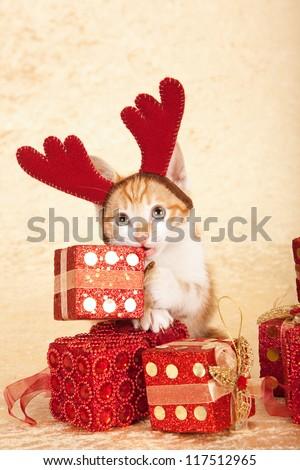 Naughty kitten biting into christmas gift, wearing antler hat, on beige background - stock photo