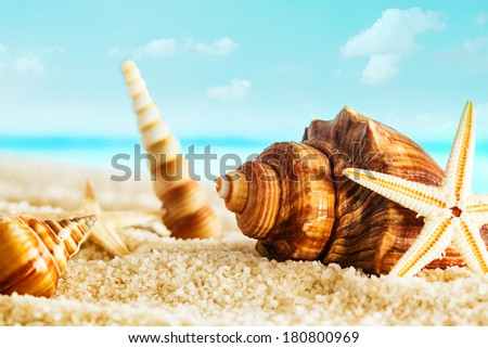 Nautical still life with seashells and starfish on golden sand on a sunny summer seashore with an azure blue ocean and sky - stock photo