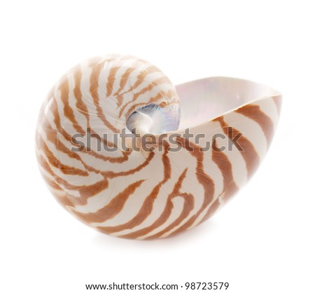 Nautilus pompilius sea shell, isolated on white, shallow dof