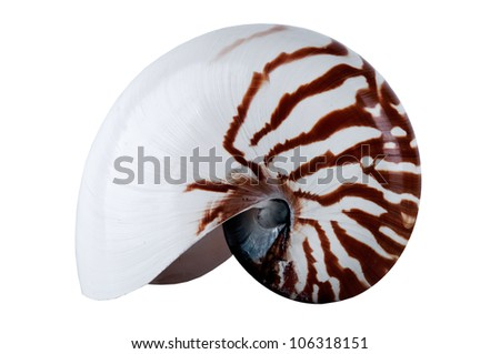 Nautilus Shell isolated on white background - stock photo